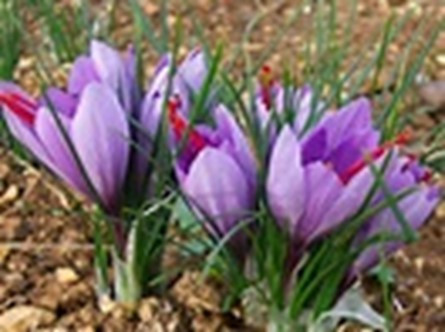 Plant Bulbs for Spring Flowers Now