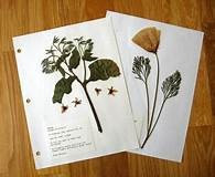 Build a Herbarium with Your Kids