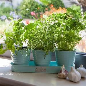 Fall Herbs in Pots
