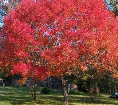 Need a Tree?