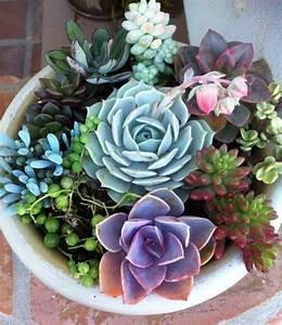 Choosing a Succulent