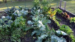 Fall Garden Calendar