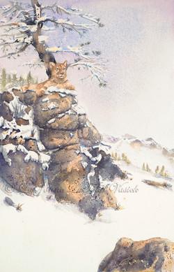 Ruby Mountain Cougar