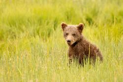 Spring Cub by Heather Nicole
