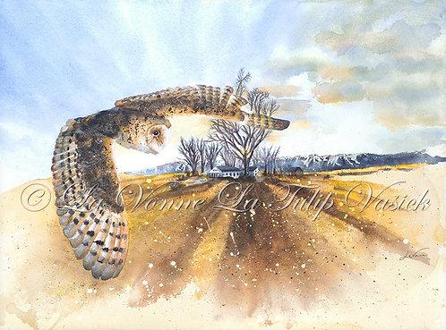 Barn Owl - Longshadows