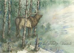 Elk - Jarbidge Wilderness