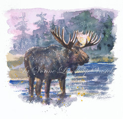 Bull Moose - Jarbidge Wilderness