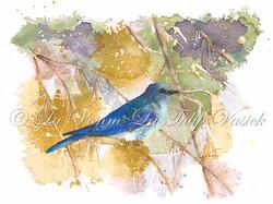Mountain Bluebird - NV State Bird