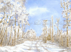 Early Snow Walks