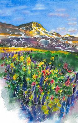 Sierra Wildflowers - Round Top
