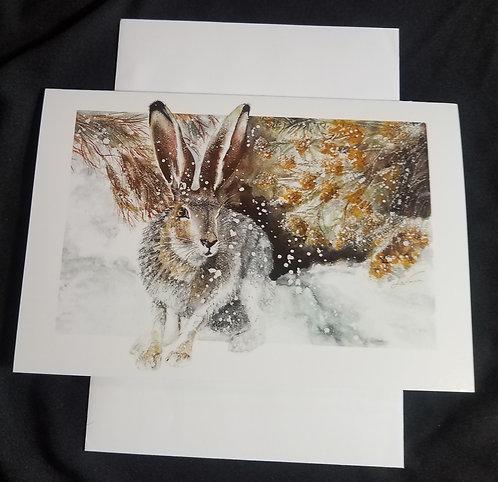 Jack Rabbit - Snow Den