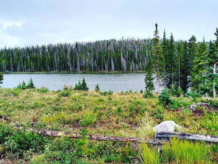 A Secluded Gem At Teal Lake