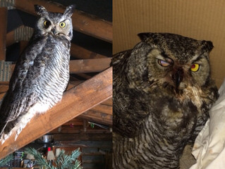 Wildlife Rehab Update
