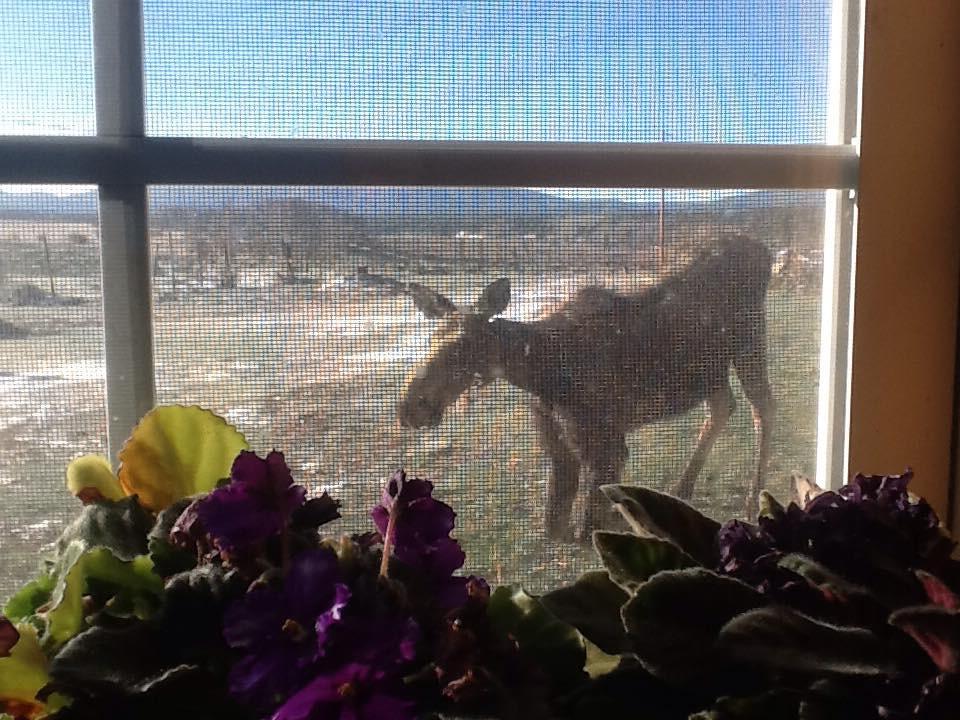 Moose photo by Elizabeth Schleppy