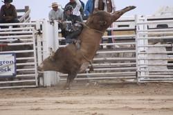 rodeo+weekend+787