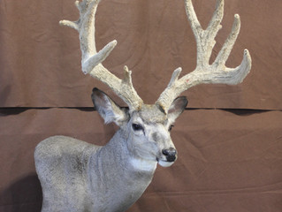 The Art Of The Wild Captured By Local Taxidermist