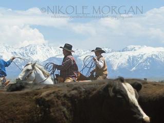 Ranch Life Clicks For Local Photographer