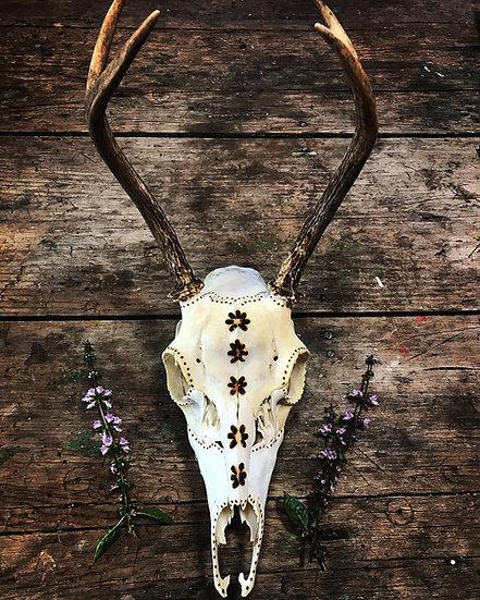 Mountain Mama Handburned Deer Skull