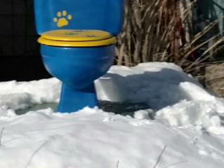 The Blue & Gold Traveling Toilet