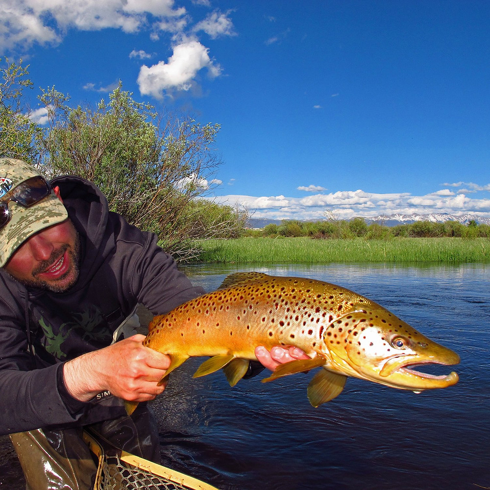 Scott Graham holding a beautiful Brown Trout