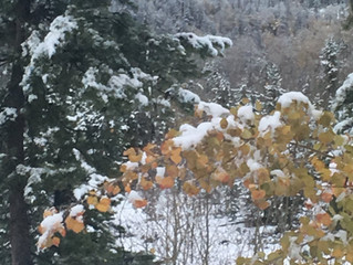 The Aspens Kissed By Snow
