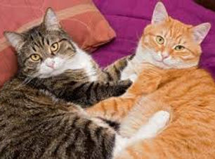 chats adultes.jpg