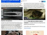 ARTICLE PANDA.jpg