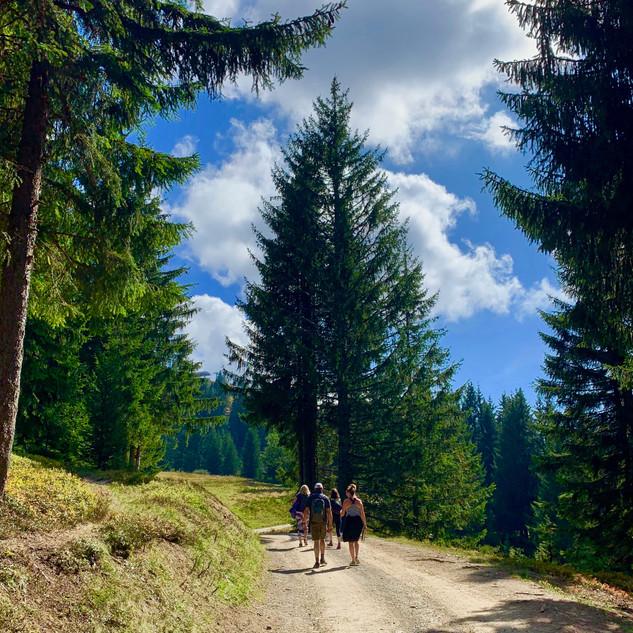 F&F walk in Pines.jpg