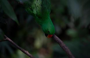 Green Bird Green