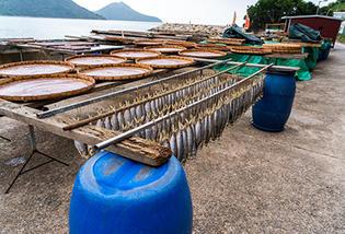 Tai O Fish Drying