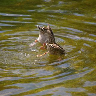 Gull River, Kawarthas
