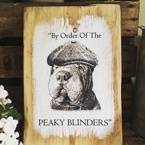 Peaky Blinder Shar pei