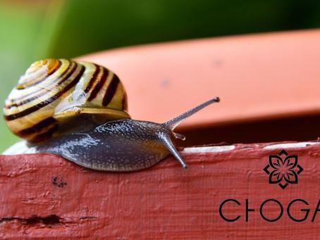 Prodotti Chogan: Linea alla Bava di Lumaca