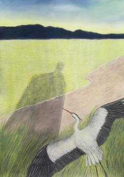 'The Grey Heron'