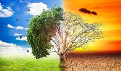 global warming tree halves 1 image.jpg
