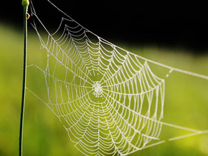 Audio: The Spider in Your Room