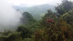 Yunque Canopy