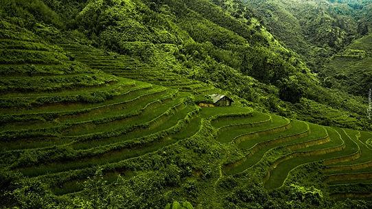 tapeta-ryzowe-pola-w-wietnamie.jpg