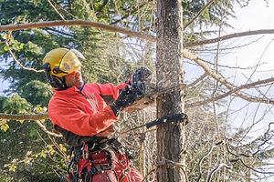 Podiranje dreves s plezalno tehniko (foto Jernej Strmšek)