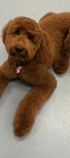 Dog Grooming and Doggie Daycare Pitt Meadows Maple Ridge Port Coquitlam