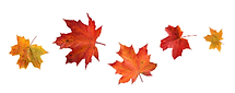 bunch of leaves.png