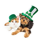 st pats dog and cat.jpg