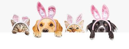 easter dogs and cats.jpg