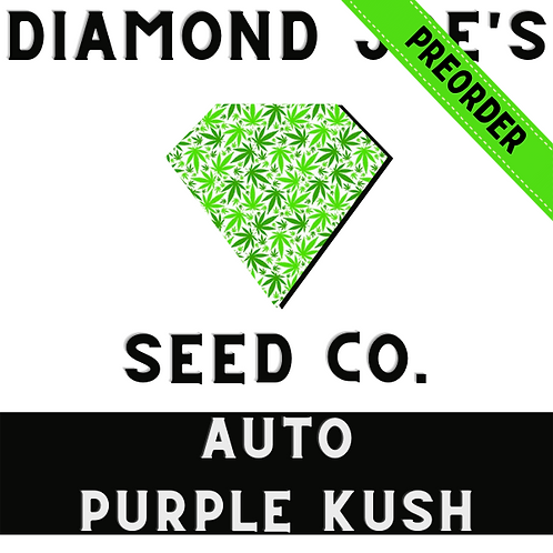 Auto Purple Kush Fem **pre order will be shipped in late July