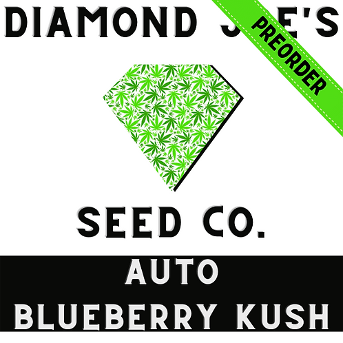 Auto Blueberry Kush fem ** pre order will be shipped in late July