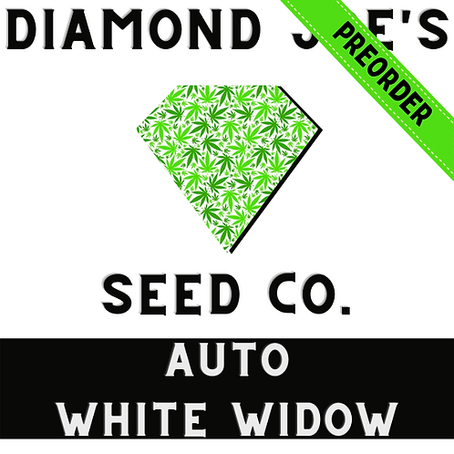 Auto White Widow fem ** pre order will be shipped in late July