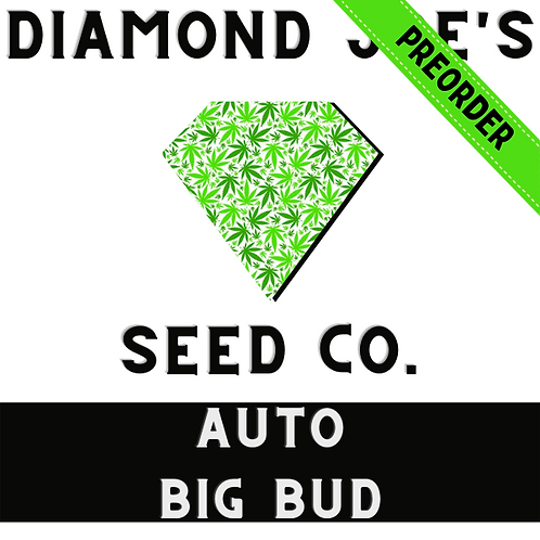 Auto Big Bud fem ** pre order will be shipped in late July