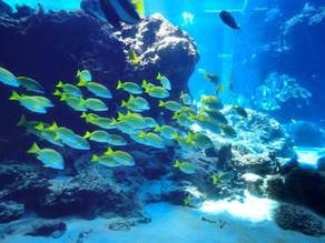 The Fabien Cousteau Ocean Learning Center