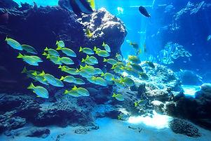troupeau de poissons
