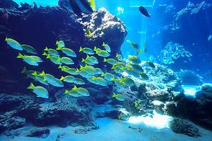 Fish flock